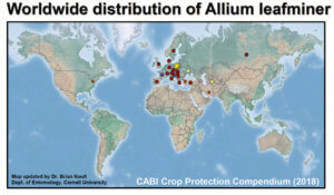 Map of Allium leafminer distribution