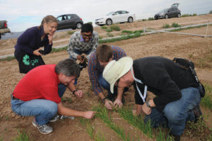 Onion researchers in field