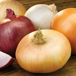 onion varieties Onion Association
